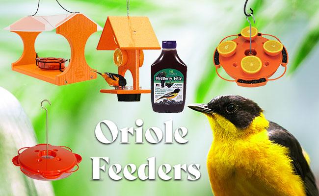 Oriole Feeders
