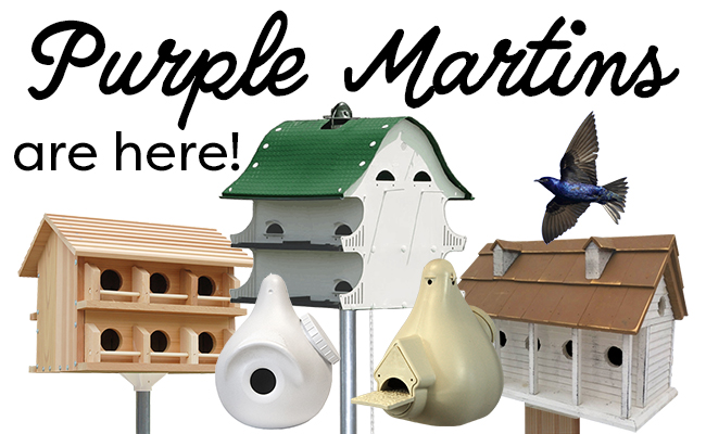 PurpleMartins