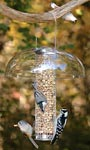 Aspects Peanut Silo Bird Feeder, Medium