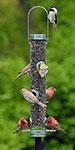 Droll Yankees A-6 Bird Feeder