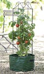 "Gardman Climbing Tomato Planters, 17"" dia., Pack of 2"
