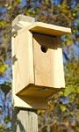 Heartwood Joy Box Eastern Bluebird House