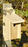 Heartwood Joy Box Western Bluebird House