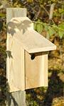 Heartwood Joy Box Western Bluebird House