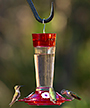 More Birds Ruby Hummingbird Feeder, 10 oz.