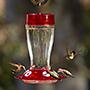 More Birds Big Gulp Hummingbird Feeder, 38 oz.