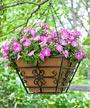 """Panacea Boulevard Quatrefoil Hanging Basket, 14""""L"""