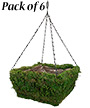 """Panacea Natural Moss Square Hanging Baskets, 14""""L, Pack of 6"""
