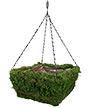 "Panacea Natural Moss Square Hanging Basket, Green, 14""L"