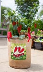 "Panacea Peppers Grow Bags, 11"" dia., Pack of 4"