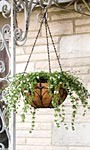 "Panacea Classic Finial Series Hanging Basket, Black, 14"" dia"
