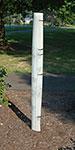 "Tree Pro Standard Vented Seedling Protectors, 48""H, 20 Pack"