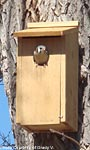 Woodlink Screech Owl & Kestrel House